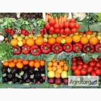 Предлагаю крупным оптовикам семена овощей и зелени от производит