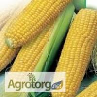 Продаю насіння кукурудзи гібриди Монсанто ДК, ДКС ФАО 170 - 330