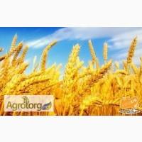 Куплю сою и не ГМО