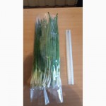 Продам зеленый лук (перо), сорт Штутгартен - Ризен