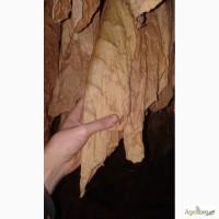Продам листя табаку