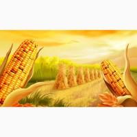 Принимаем сельхозпродукцию по всем регионам Украины (Кукурузу)