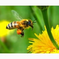 Продам бджолопакети 50шт
