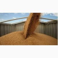 Перевалка зерновых и масличных