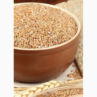 Пшеница. Куплю пшеницу. Запорожье и область