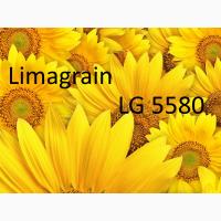 Насіння соняшника LIMAGRAIN ЛГ 5580
