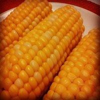 Кукуруза Кадр семена