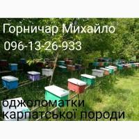 Бджоломатки карпатки вучківського типу 2019