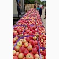 Яблоки летние Дискавери 60