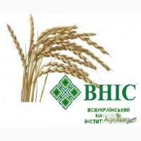 Пшениця спельта 100 т
