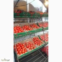 Продам томат Калиновка. Розовый. Стандарт. Вторые сорта. Ветка. Сливка. с НДС