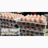 Куплю куриное яйцо на экспорт
