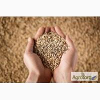 Закупаем все виды зерновых культур