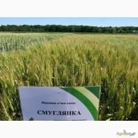 Смуглянка пшеница озимая
