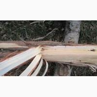 Можжевельник древесина, ветки, иглы