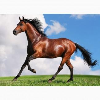 Куплю лошадей