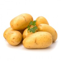 Продам картоплю в оптових об#039;ємах продам картоплю оптом в наявності посадкова картопля