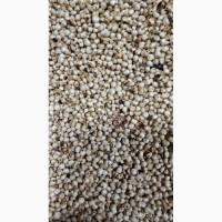 Продам сорго белое (белоснежное)-50 тонн