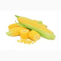 Закупка Кукурузы большими обьемами на постоянной основе