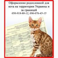 Оформление родословной для кота на территории Украины и за границей, Харьков