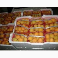 Продам абрикосы