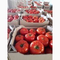 Продам тепличные помидоры и огурцы от поставщика