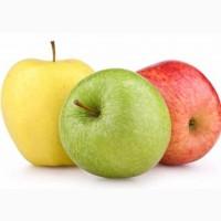 Продаю Яблока на переработку