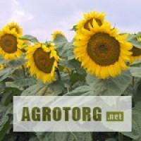 Семена подсолнечника селекции ВНИС:Украинский F1,Украинское солнышко ,Заграва