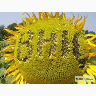 Семена подсолнечника гибрид Украинский F1