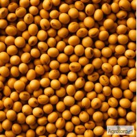 Семена канадской сои сорт Медисон (Medison)