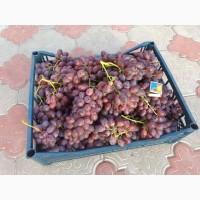 Продам столовый виноград, сорт Шоколадный Экстра