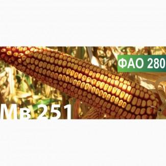 Продам семена кукурузы венгерской селекции Mv 251 (ФАО 280)