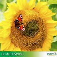 Гибрид подсолнечника ЕС Флоримис (А-Е) Clearfield Euralis Semences (Евралис Семанс)