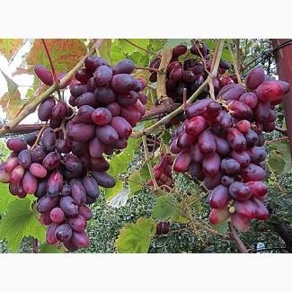 Куплю виноград крупным оптом