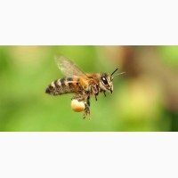 Настойка восковой моли 20%, огневка пчелиная, гарантия качество, быстрая доставка.Звоните