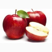 Підприємство закуповує яблука на переробку