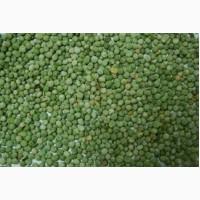 Семена посевного зеленого гороха сорта Гарде (1 репродукции)