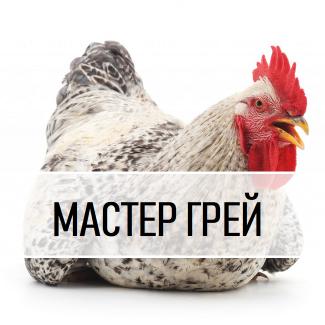 Інкубаційне Яйце. М#039;ясо-яєчний Крос Мастер грей з Угорщини. Вихід від 80% ціна 13 грн