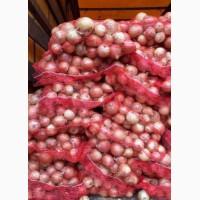 Продам лук 1 тонн
