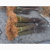 Продам якісну підщепу для яблуні ММ-106, 54-118, 62-396, М-9 Т337
