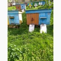 Продам бджолосім'ї з вуликами