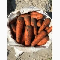 Продам морковь товарную Боливар 1 сорт