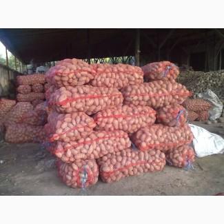 Продам картофель с доставкой по Украине