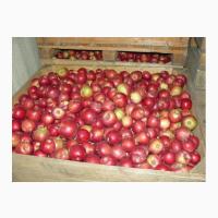 Купим яблоки на переработку в Украине