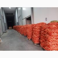 Продам лук «Легаси» оптом в Киеве