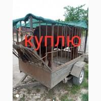 Закупаем коров тёлок быков