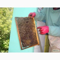 Продаю мед и продукты пчеловодства с собственной пасеки