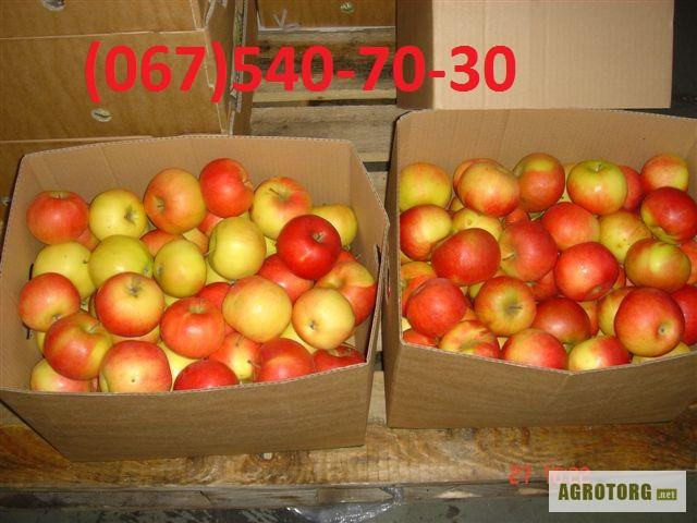 Дать объявление продать яблоки дать объявление русичи моршанск