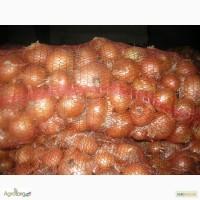Продам лук репчатый сорта Халцедон, Манас-калибр 5-7 , Арпаш-калибр до 3.6, г. Киев