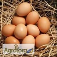 Инкубационное яйцо бройлера РОСС-708, РОСС-308 и КОББ-500
